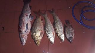 02 gói Mồi câu cá Chép đặc biệt (500gr)